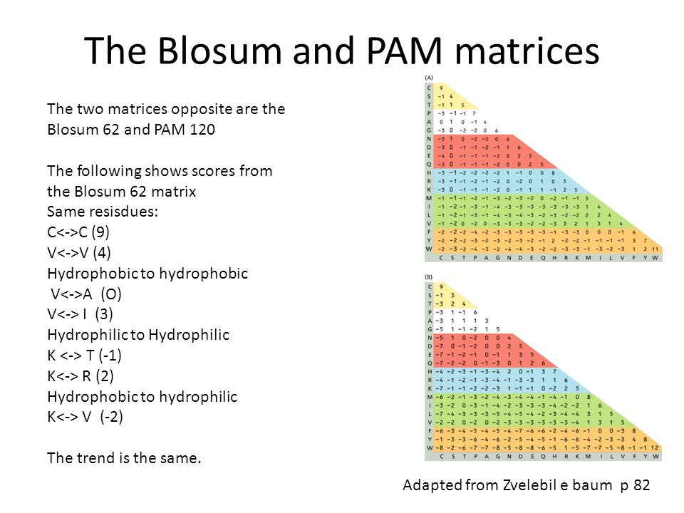 The Blosum and PAM matrices