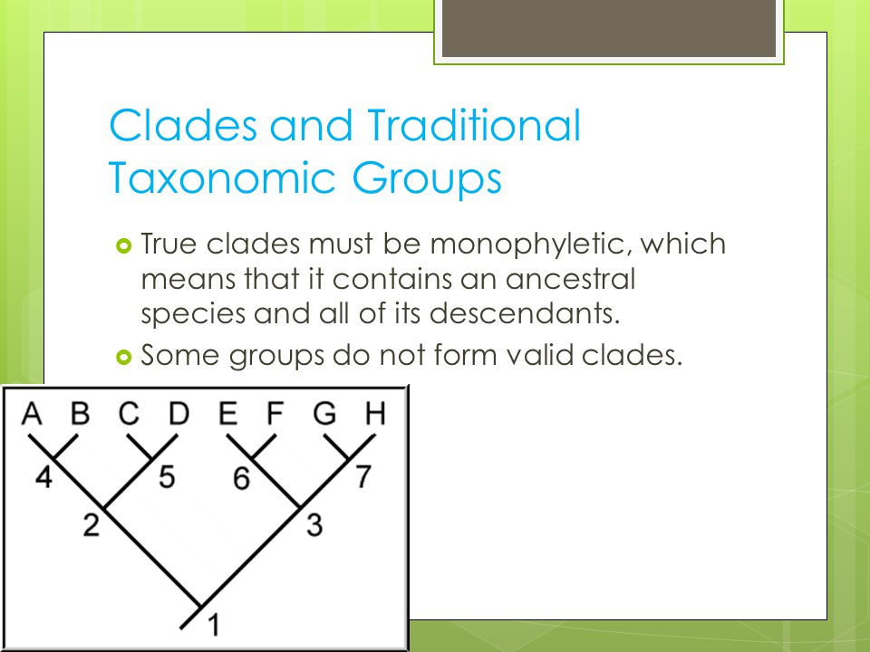 Clades and Traditional Taxonomic Groups