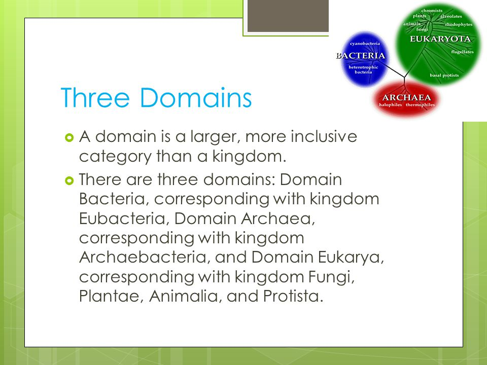 Three Domains A domain is a larger, more inclusive category than a kingdom.
