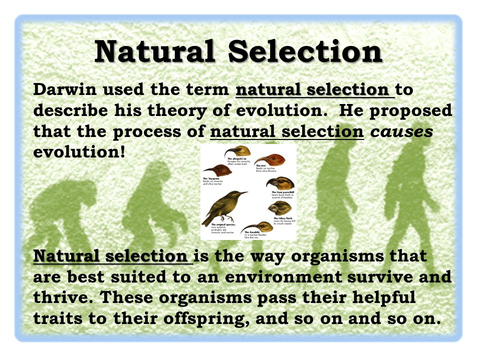 the two main points of darwins theory of evolution Learn about eight key people who influenced and inspired charles darwin as darwin the two pooled their on charles darwin's theory of evolution.