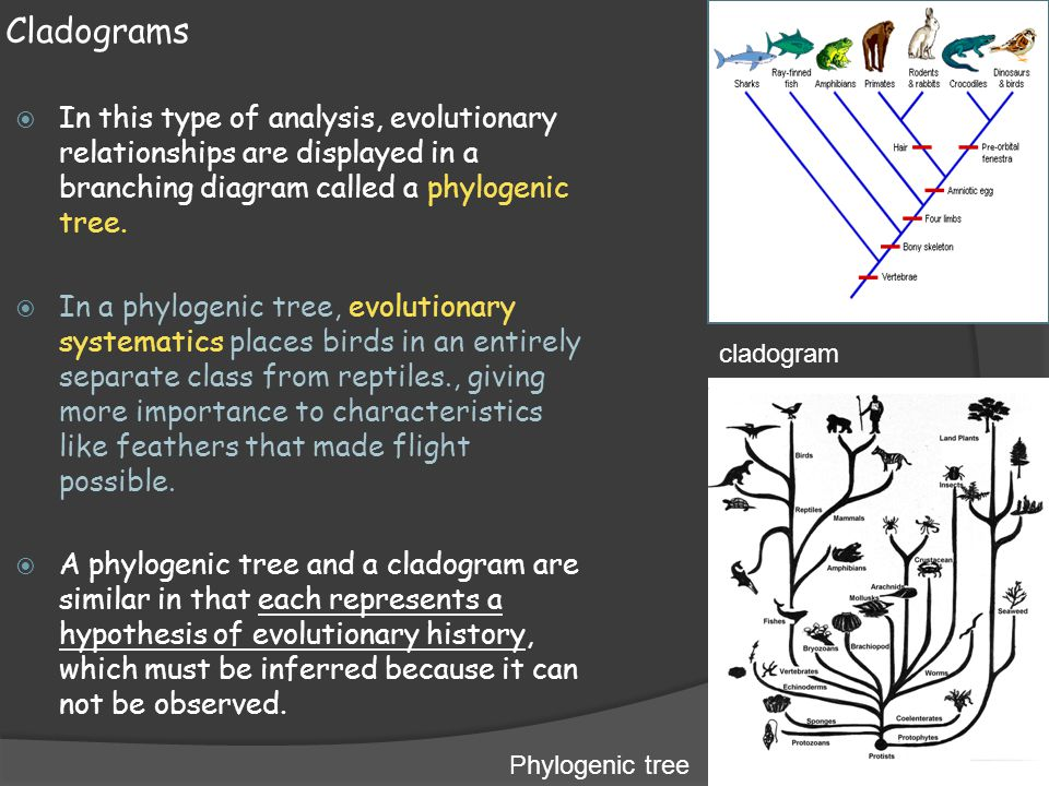 Snap Branching Tree Diagram Definition Image Collections How To
