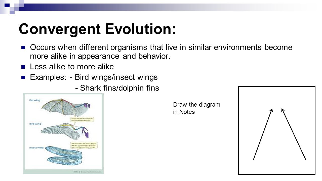 Unit 10: History of Biological Diver PAP Evolution: Darwin ...