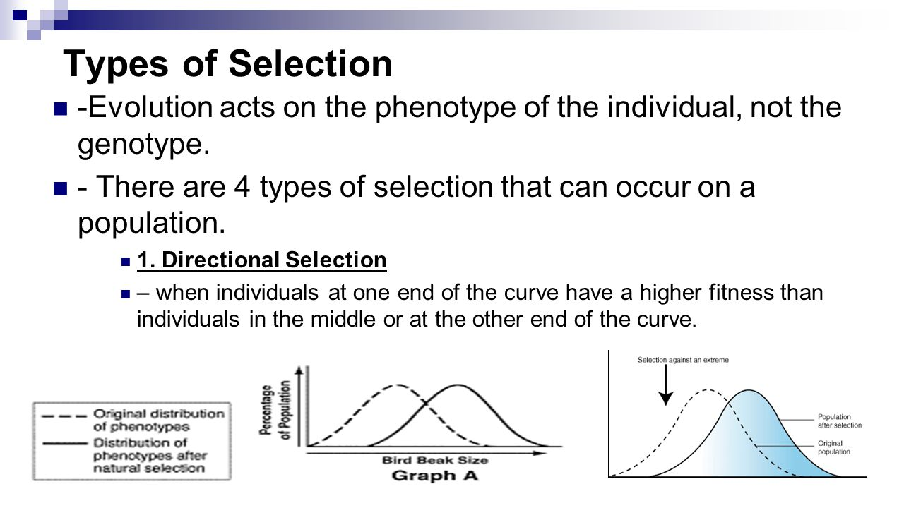 Evolution by natural selection worksheet answers university of california