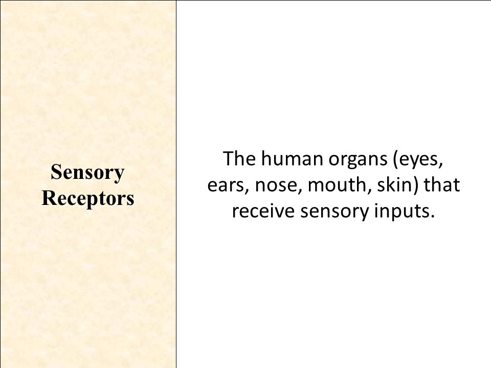 Sensory Receptors The human organs (eyes, ears, nose, mouth, skin) that receive sensory inputs.