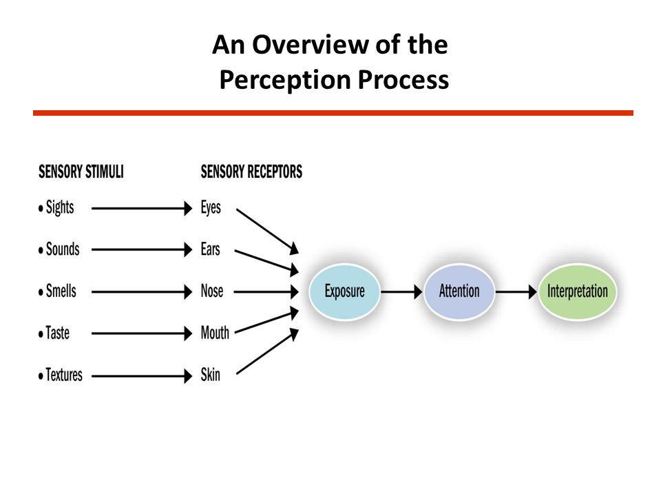 An Overview of the Perception Process