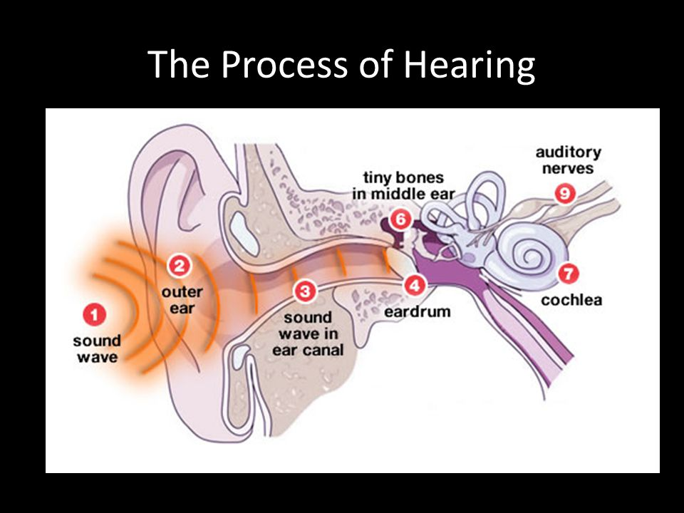 The Ear Parts Functions And Hearing Process Ppt Video