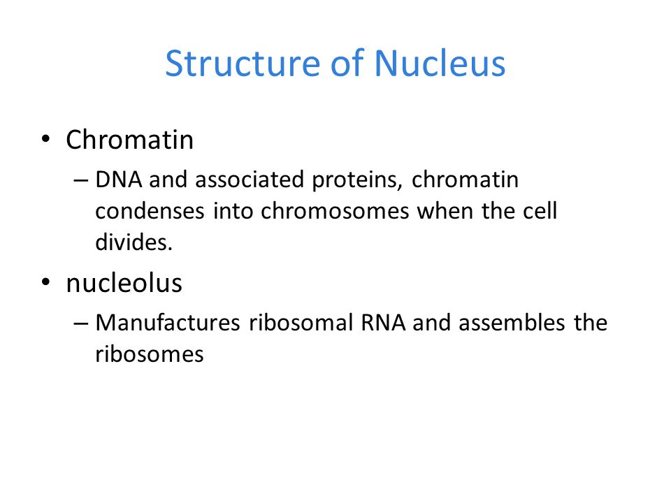 relationship between nucleolus ribosomes and proteins carbohydrates