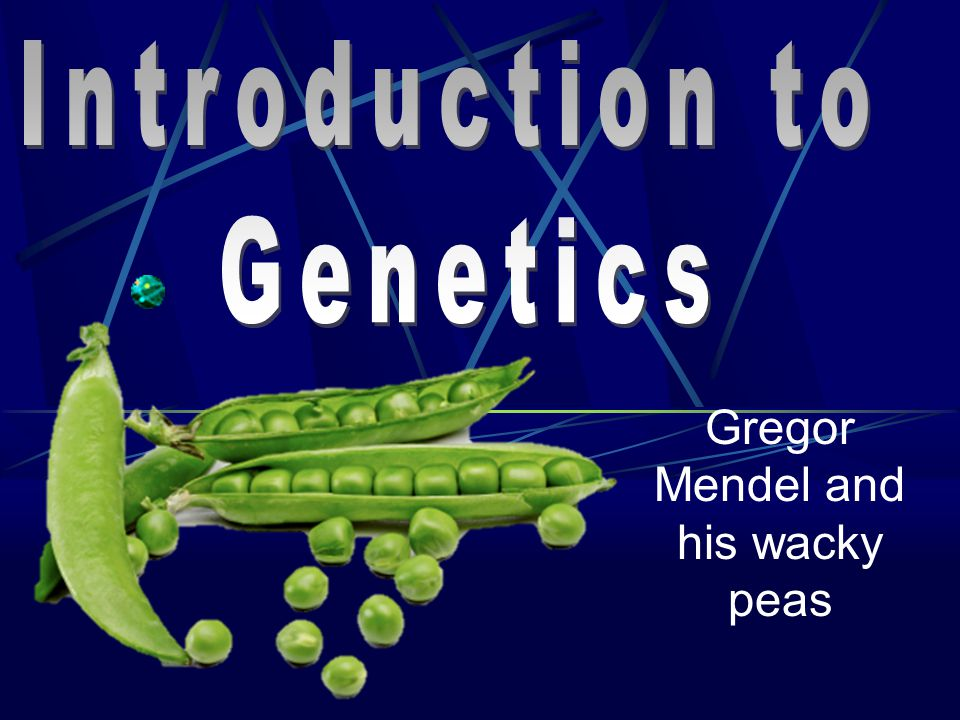 Gregor Mendel and his wacky peas