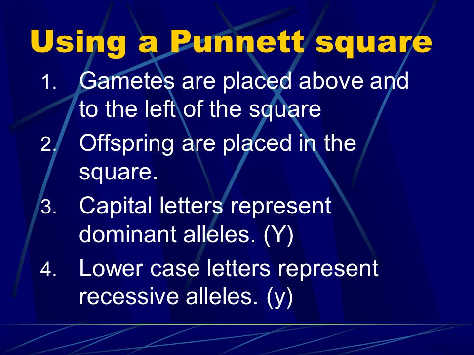 Using a Punnett square Gametes are placed above and to the left of the square. Offspring are placed in the square.