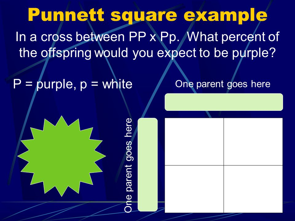 Punnett square example