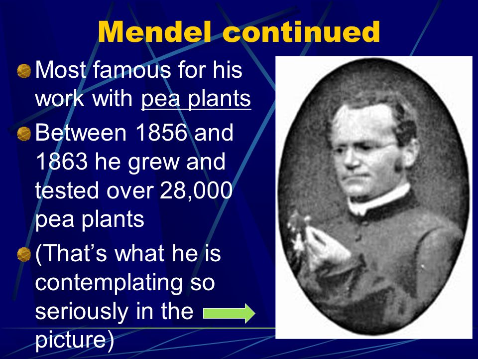 Mendel continued Most famous for his work with pea plants