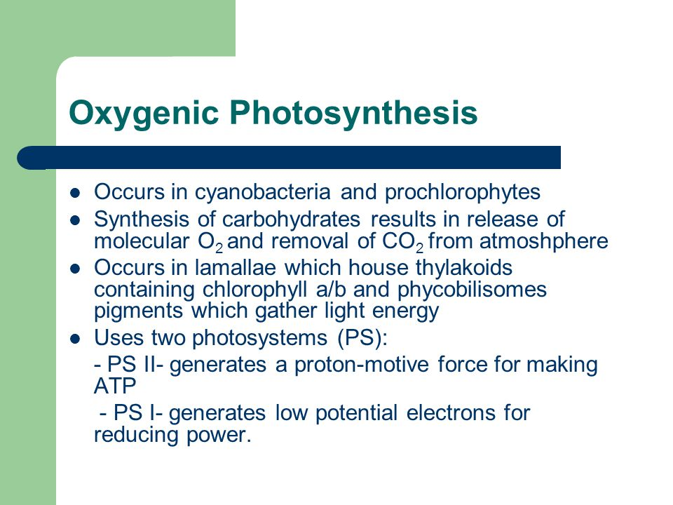 oxygenic photosynthesis Photosynthesis evolution in cyanobacteria how and when cyanobacteria evolved the ability to produce oxygen through photosynthesis is poorly understood soo et al examined the genomes of cyanobacteria and other related bacterial lineages the phylogenetic relationships of these prokaryotes.