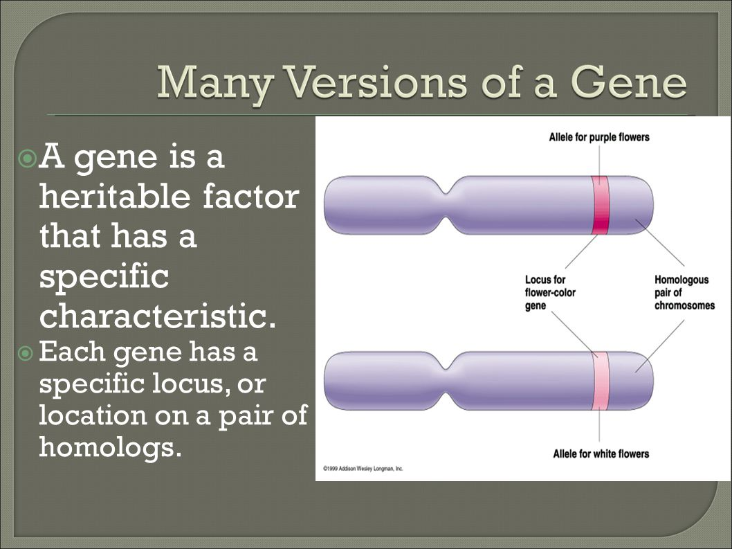 A gene is a heritable factor that has a specific characteristic.