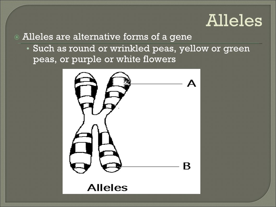 Alleles Alleles are alternative forms of a gene