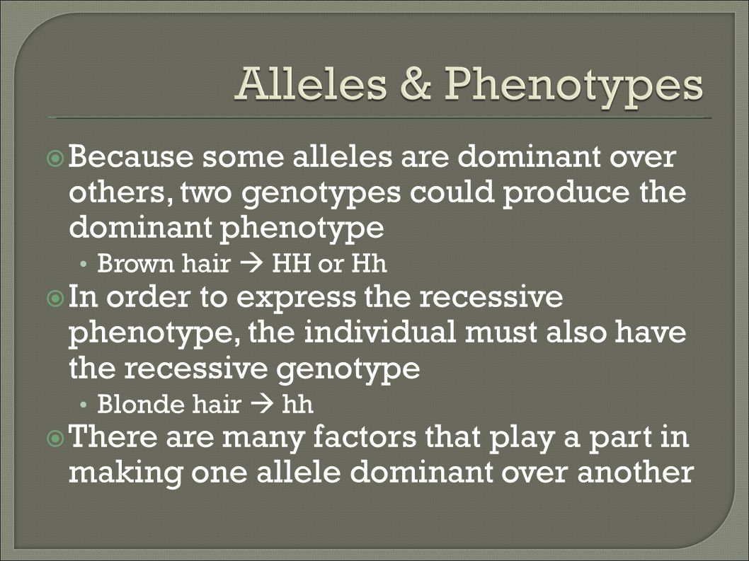 Because some alleles are dominant over others, two genotypes could produce the dominant phenotype