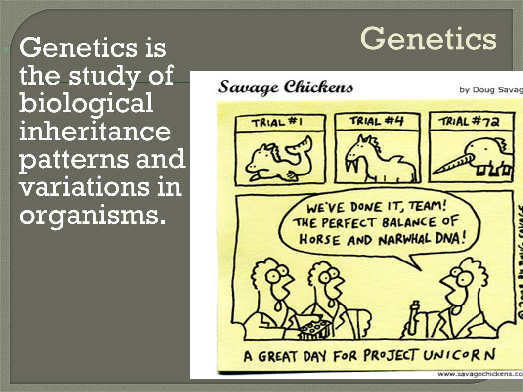 Genetics Genetics is the study of biological inheritance patterns and variations in organisms.