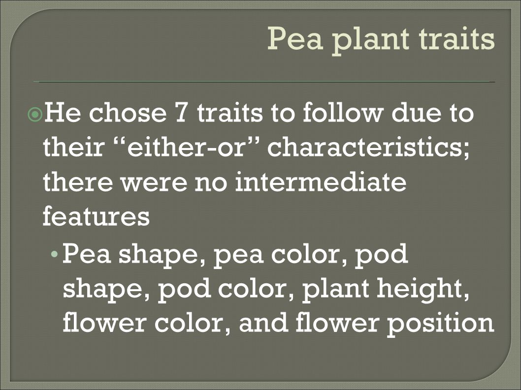 Pea plant traits He chose 7 traits to follow due to their either-or characteristics; there were no intermediate features.