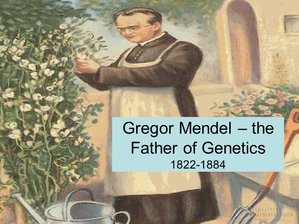 Gregor Mendel – the Father of Genetics