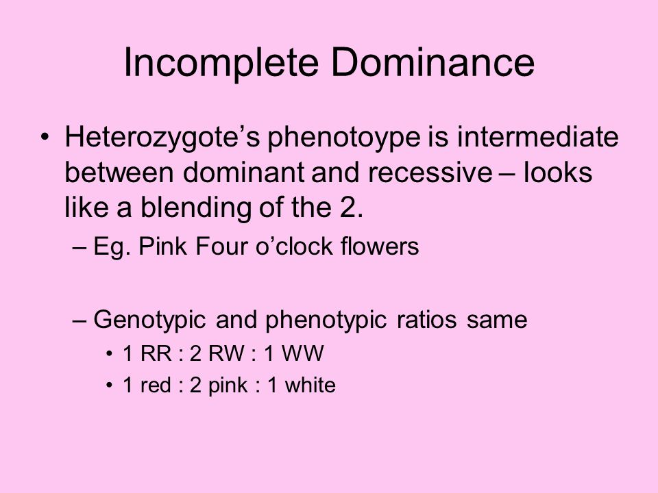 Incomplete Dominance Heterozygote's phenotoype is intermediate between dominant and recessive – looks like a blending of the 2.