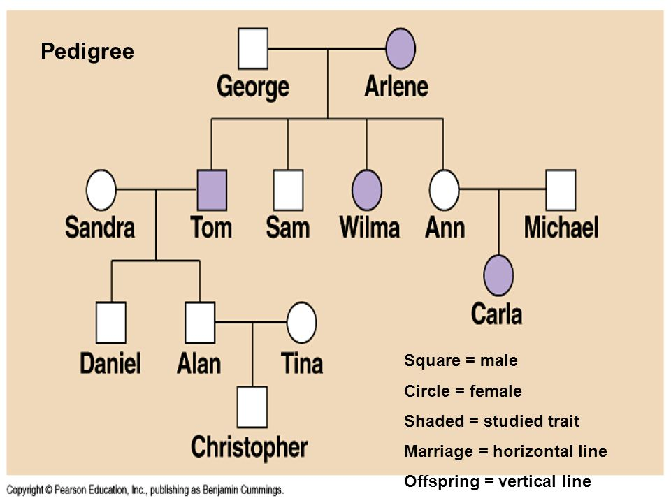Pedigree Square = male Circle = female Shaded = studied trait