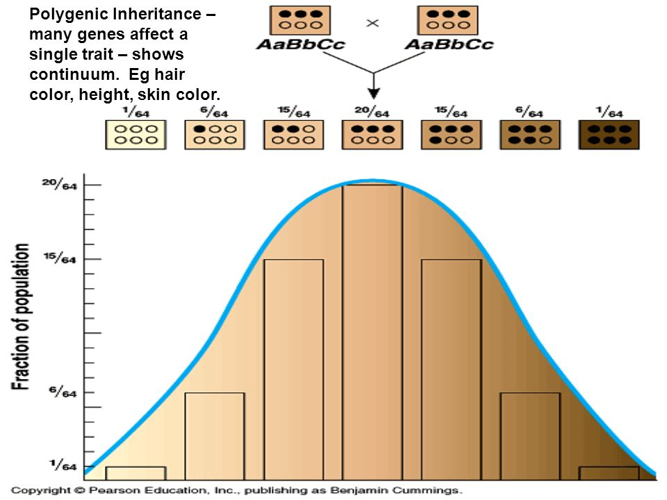 Polygenic Inheritance – many genes affect a single trait – shows continuum.
