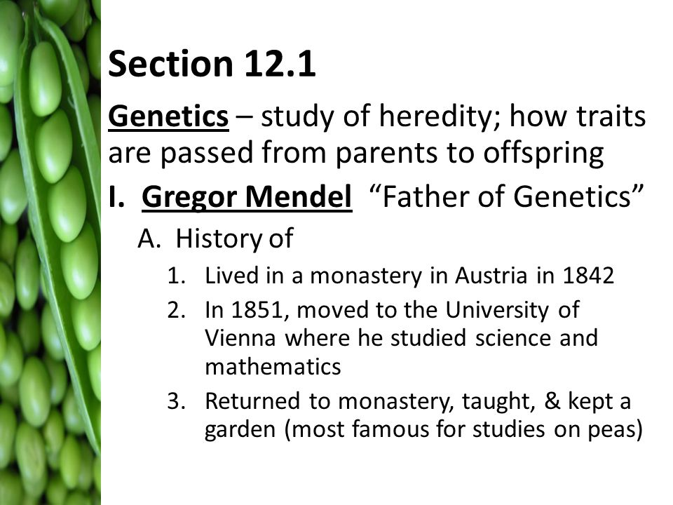 gregor mendel and the study of genes The breeding experiments of the monk gregor mendel in the mid‐1800s laid the groundwork for the science of genetics he published only two papers in his lifetim.