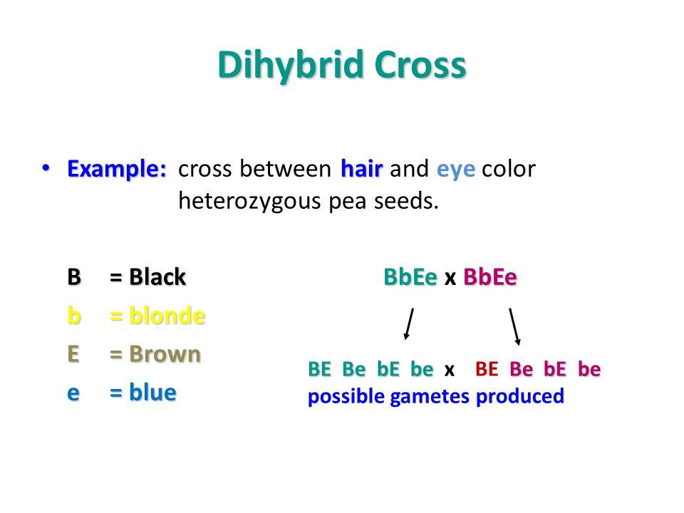Dihybrid cross worksheet peas