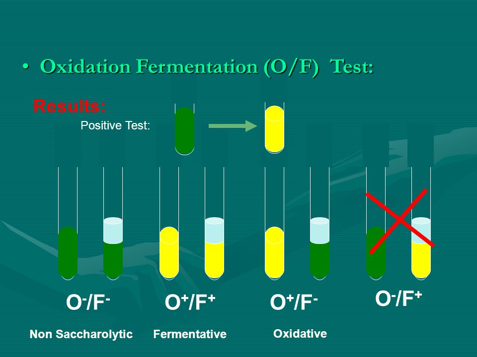lab results fermenter The minifor is a compact laboratory fermentor based on long personal practical  experience of fermentation the goal was to create a bioreactor, which is easy to.