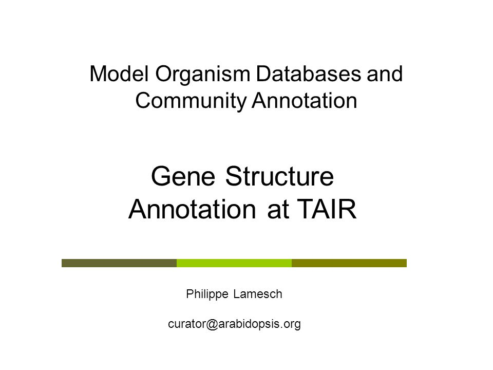 Model Organism Databases and Community Annotation
