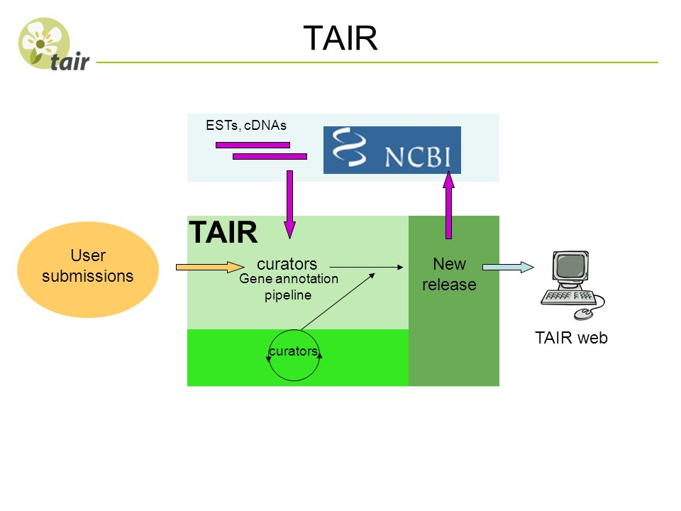 TAIR TAIR User submissions curators New release TAIR web ESTs, cDNAs