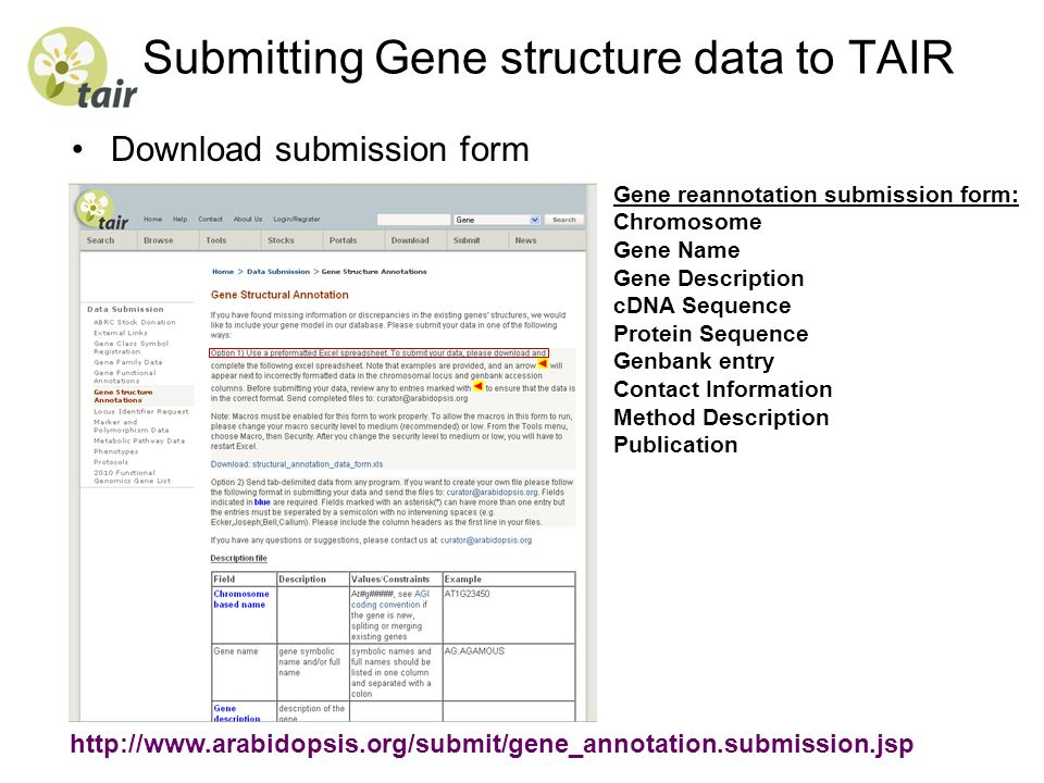 Submitting Gene structure data to TAIR