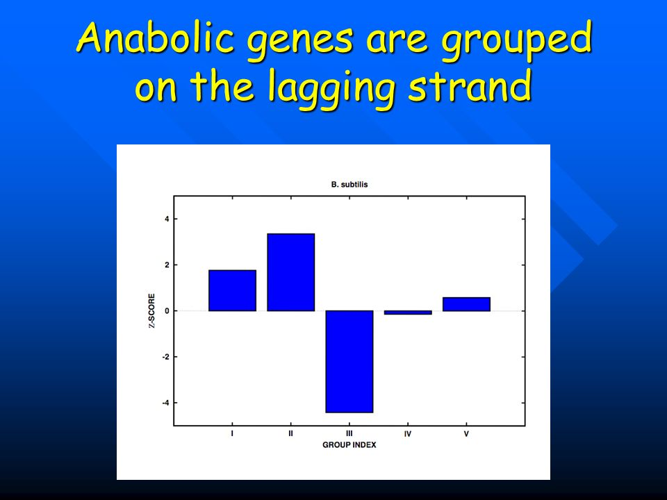 Anabolic genes are grouped on the lagging strand