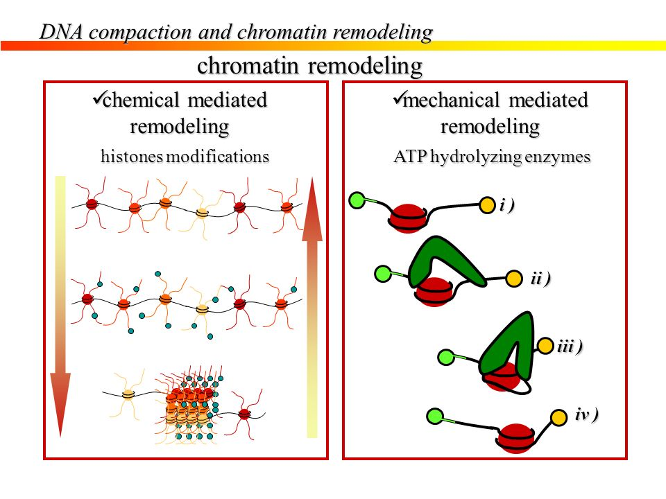 chromatin remodeling DNA compaction and chromatin remodeling