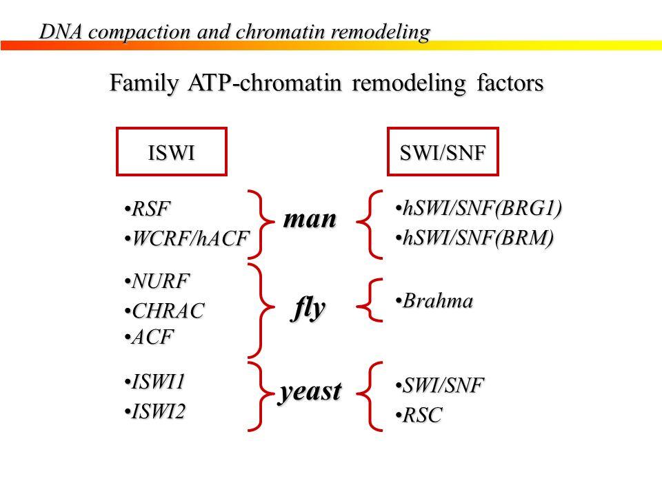 Family ATP-chromatin remodeling factors