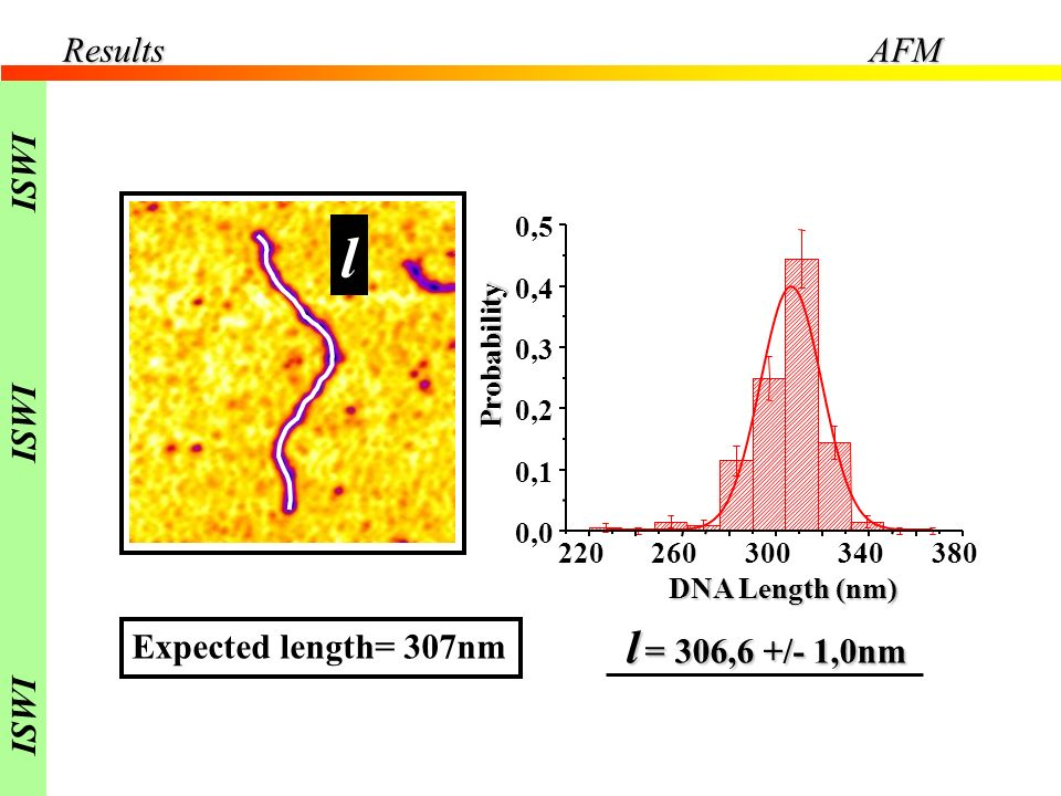 l l = 306,6 +/- 1,0nm Results AFM ISWI Expected length= 307nm