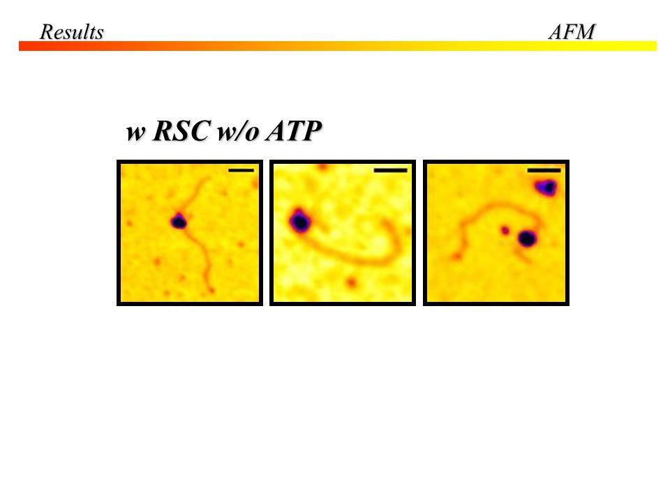 Results AFM w RSC w/o ATP