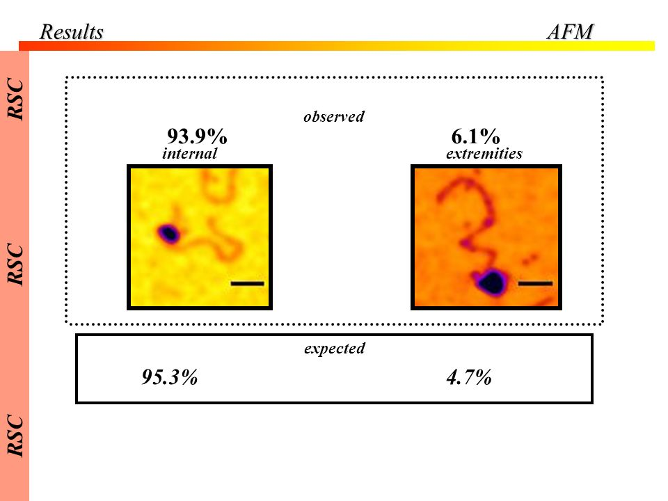 Results AFM RSC 93.9% 6.1% 95.3% 4.7% observed internal extremities