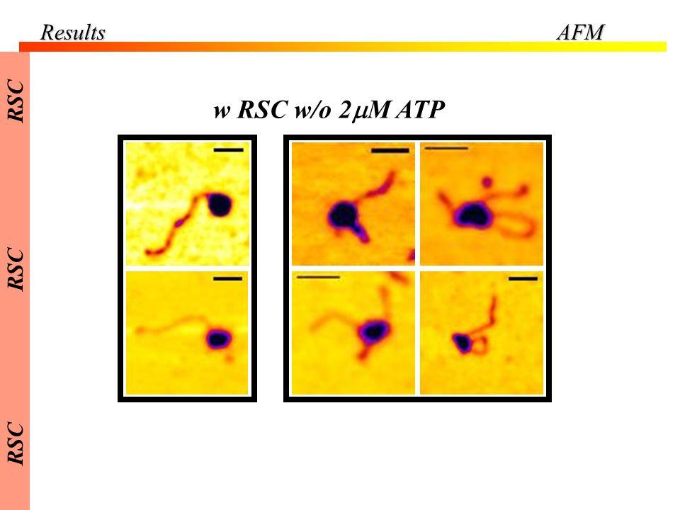 Results AFM RSC w RSC w/o 2mM ATP