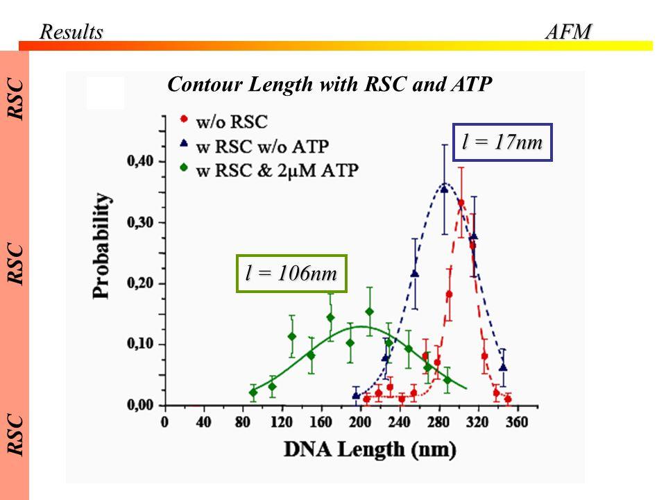 Results AFM RSC Contour Length with RSC and ATP l = 17nm l = 106nm