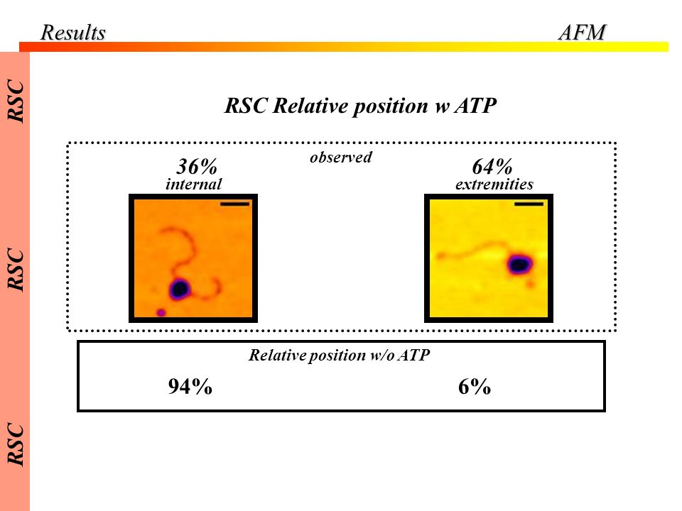 RSC Relative position w ATP