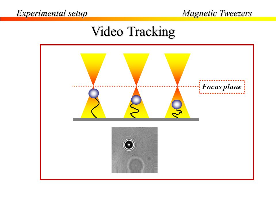 Experimental setup Magnetic Tweezers Video Tracking Focus plane
