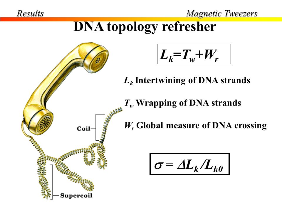 DNA topology refresher s>0 s<0