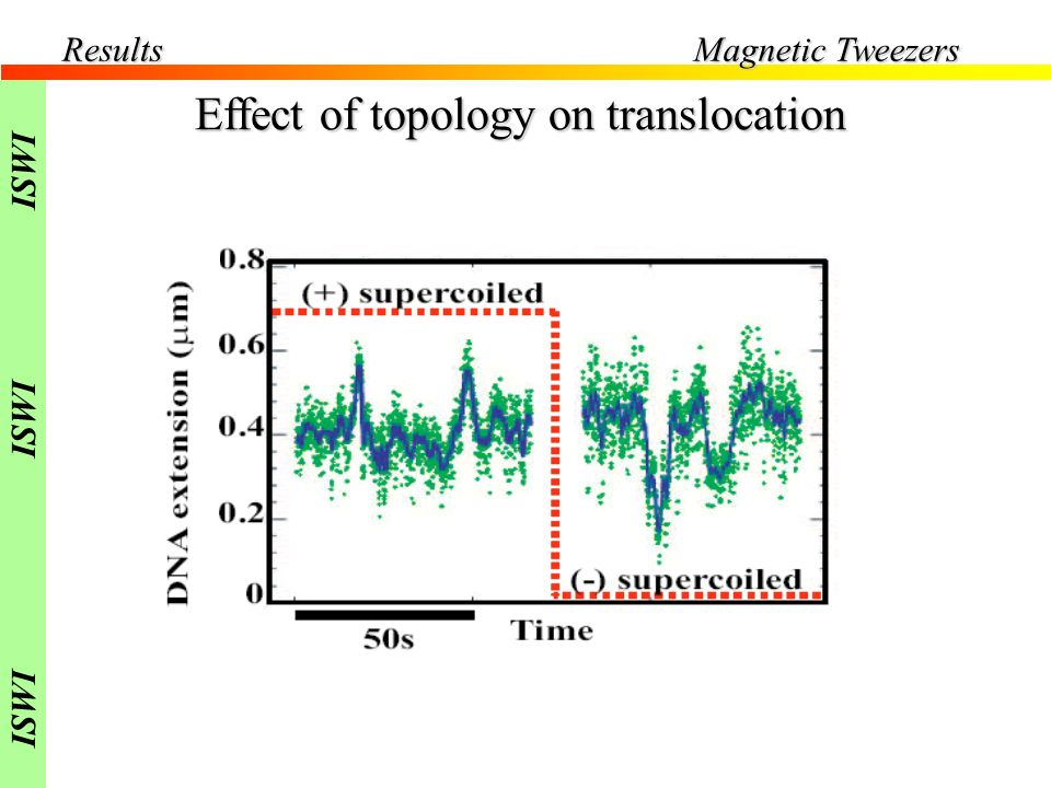 F=0.4pN Effect of topology on translocation Results Magnetic Tweezers