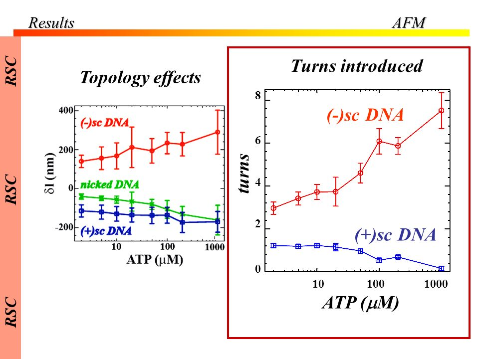 Turns introduced Topology effects (-)sc DNA turns (+)sc DNA ATP (mM)