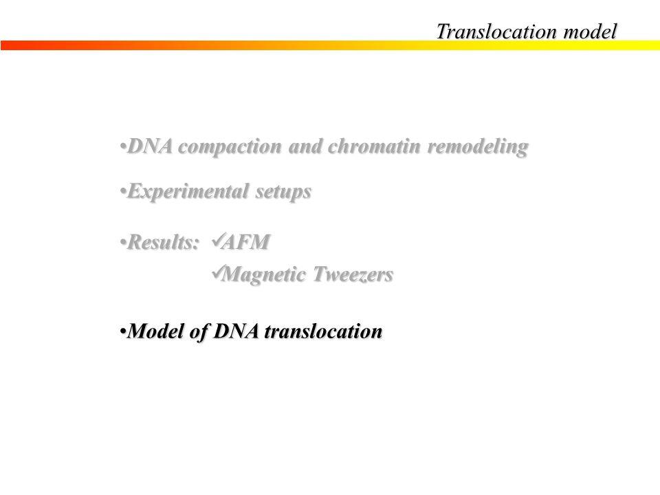 Translocation model DNA compaction and chromatin remodeling. Experimental setups. Results: AFM. Magnetic Tweezers.