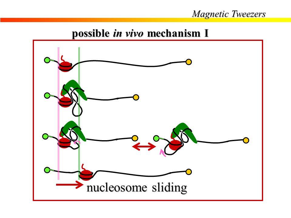 possible in vivo mechanism I