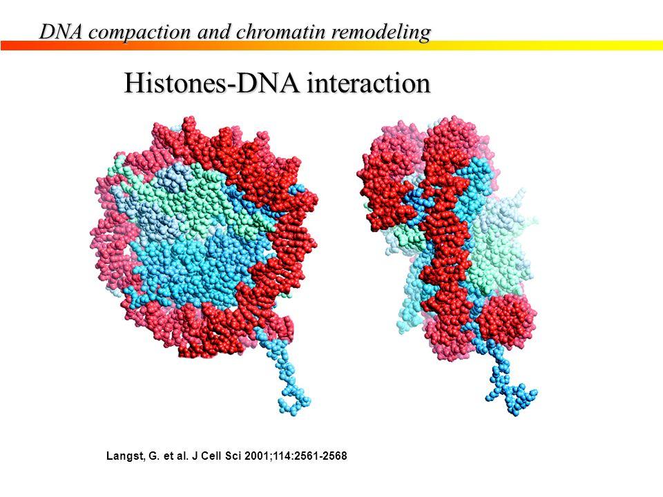 Histones-DNA interaction