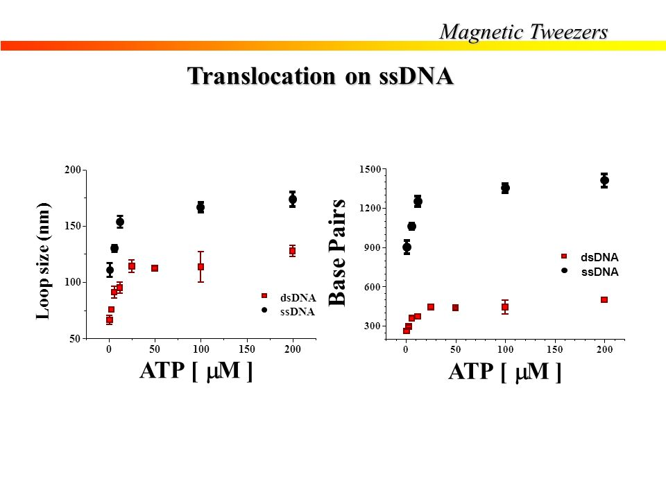 Translocation on ssDNA