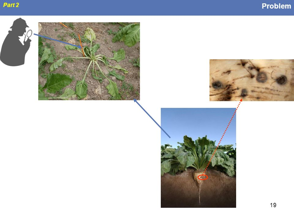 Problem Part 2 From belowground infections to above-ground detection of the disease