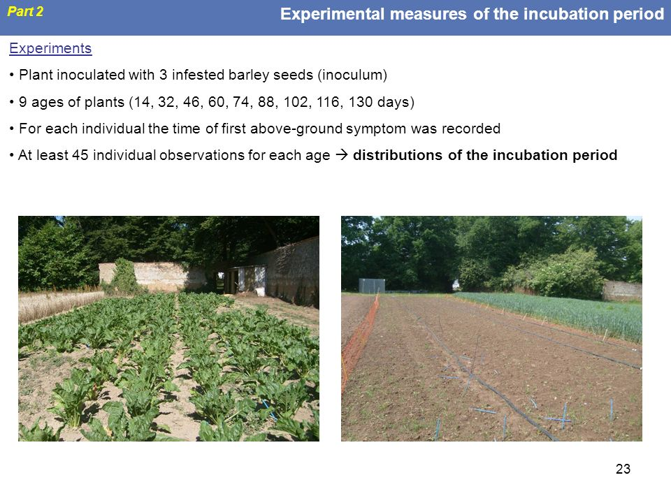 Experimental measures of the incubation period
